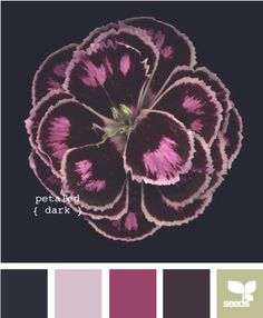 petaled dark - not the flower but the colors are simular to what i'm looking for