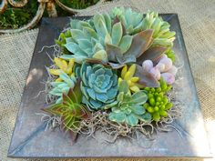 Succulent Centerpiece, Succulent Garden, Succulent Tabletop, Succulent Wedding Table Decor, Fall Wedding Table. $32.00, via Etsy.