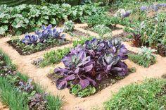 300 kg de légumes sur un petit terrain