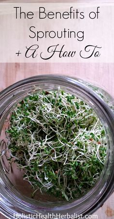 The Benefits of Sprouting + A How To http://www.holistichealthherbalist.com/the-benefits-of-sprouting-a-how-to/