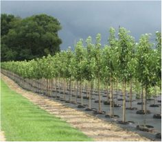 New Life Nursery-wholesale plant supplier Bridgeton NJ -Serving clients from New England and throughout the Mid-Atlantic States. www.facebook.com/newlifenurseryinc Call 856-455-3601 Wholesale Plant Nursery, Mid Atlantic States, Wholesale Plants, New Life, New England, Country Roads, Facebook