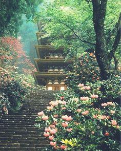 japan, garden