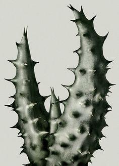 'Cactus 3' by by Paris-based American photographer Peter Lippmann. via the artist's site