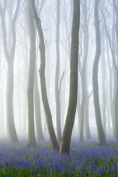 International Garden Photographer of the Year - Competition 10 | Trees, Woods & Forests Winners
