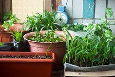 Orto sul balcone: cosa piantare a settembre