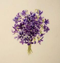 Violet, Viola mandshurica by Chisako Fukuyama