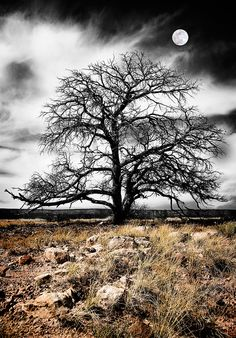 Winter Tree, Ghost Ranch - Abiquiu, New Mexico
