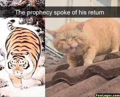 The prophet spoke - World's largest collection of cat memes and other animals Funny Animal Memes, Stupid Funny Memes, Cute Funny Animals, Funny Relatable Memes, Funny Animal Pictures, Cat Memes, Funny Cute, Funny Shit, Hilarious