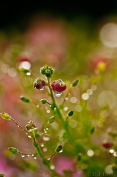 Beauty after rain by 89-RAW-89 on DeviantArt
