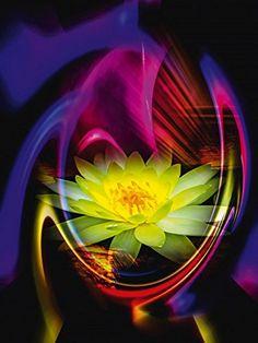 Glasbilder Artland Glasbild Blumen Pflanzen Seerosen Walter Zettl: Blühende Fantasie Seerose Größe: 60 x 80 cm Riesenauswahl in unsrem Händlershop! Artland http://www.amazon.de/dp/B00SZO5QJI/ref=cm_sw_r_pi_dp_LYMZub1KS4GWF