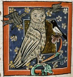 Bodleian Library, MS. Bodley 764, Folio 73v  An owl of the kind called bubo (screech owl) is mobbed by smaller birds, including a magpie.