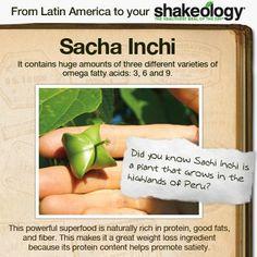 Sacha Inchi in Shakeology
