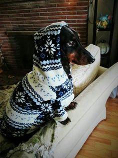 Doggie jacket