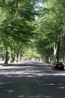 iTree. It's an easy-to-use, computer-based program that allows any community to conduct and analyze a street tree inventory.