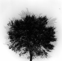 Kenneth Josephson Chicago 1973 {{this double exposure really gives the tree some sort of ora, like its a part of a memory (gab) }}