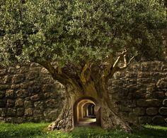 Doorway to a secret world