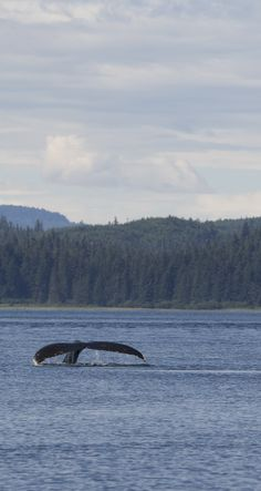 See humpback whales in Alaska.