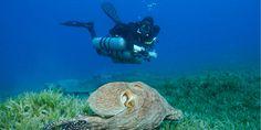 Top Technical Diving Myths • Scuba Diver LifeScuba Diver Life