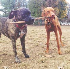 Sharing is caring! - Hartman Road Dog Park - Albany, NY - Angus Off-Leash #dogs #puppies #cutedogs #dogparks #albany #newyork #angusoffleash