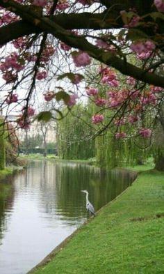 Regent's Park in London, UK