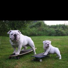 Dad's gonna teach me how to do an Ollie. Surfing next!