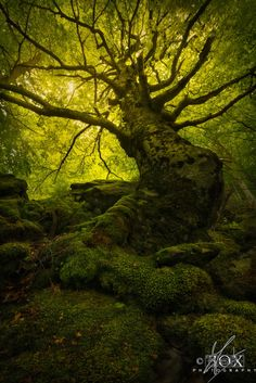 King of the Forest - Appennino Tosco-Emiliano National Park, Italy