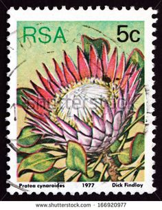 South Africa Circa 1977 Stamp Printed Stock Photo (Edit Now) 166920977 Protea Art, Protea Flower, Union Of South Africa, South Afrika, King Protea, African Flowers, Stamp Printing, Flower Stamp, Vintage Stamps