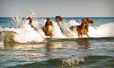 Wild Ponies of Assateague
