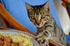 #cats Ermis