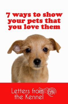 7 ways to show your pets that you love them this valentine's day and everyday. Dogs and cats are our true loves!