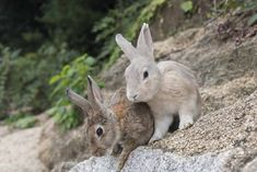 japan rabbits on wall Rabbit Island, Hiroshima, Cute Bunny, Day Trip, Paths, Travel Destinations, Places To Visit, Japan, Explore