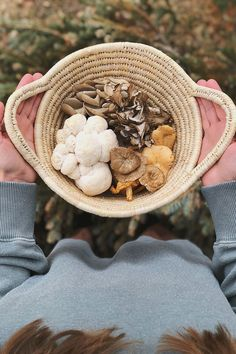 Finding immune-supportive, antiviral herbs for autoimmune disease requires an extra layer of care and research by the individual or practitioner. Wild Mushrooms, Stuffed Mushrooms, Mushroom Identification, Mushroom Species, Growing Mushrooms At Home, Wild Edibles, Living At Home, Autoimmune Disease