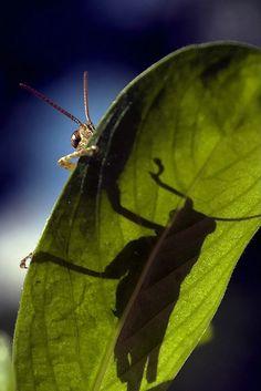Grasshopp moment love. Wild Fauna Love