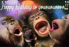 Happy Birthday Funny Wishes, Happy Birthday Funny Messages, Happy Birthday Funny Quotes, Happy Birthday Funny, Happy Birthday Wishes Funny Funny Happy Birthday Song, Funny Happy Birthday Pictures, Birthday Songs, Happy Birthday Messages, Happy Birthday Greetings, Birthday Humorous, Birthday Quotes, Birthday Cards, Humor Birthday