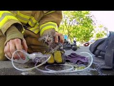 It's OK To Cry While You Watch This Fireman Rescue An Unconscious Kitten