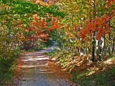12 country roads in Ohio that are pure bliss in the fall. 8. White Oak Hill Road (Pike County)