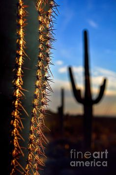 Title  Arizona Sharp Cactus Spines   Artist  Henry Kowalski   Medium  Photograph - #Photography #cactus #SonoranDesert #Arizona .. Great capture! @henrykowalski