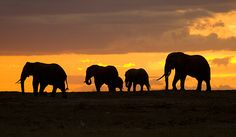 Travel with Smithsonian Journeys to a place where nature reigns supreme and experience the African wild while on Safari.  http://www.smithsonianjourneys.org/tours/african-safari/?display=itinerary#