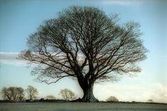 Sycamore Tree and Zacchaeus