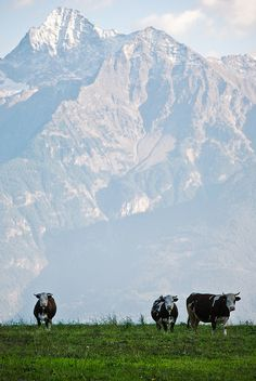 Becca di Nona and the Emilius, the mountains that dominate Aosta, Valle d'Aosta, Italy