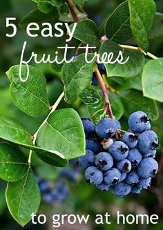 top 5 fruit trees to grow in any garden
