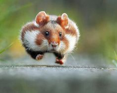 Hilarious Winners of the First Annual 'Comedy Wildlife Photography Awards' – FLOW ART STATION