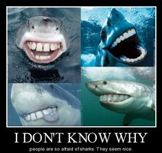 Sharks are fun to be with!