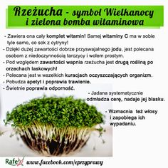 RZEŻUCHA - symbol Wielkanocy i zielona bomba witaminowa! Balanced Vegetarian Diet, Healthy Tips, Healthy Recipes, Cholesterol Foods, Natural Medicine, Superfoods, Finger Foods, Lose Weight, Herbs