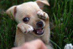 Las 20 fotografías más graciosas de perritos capturadas en el momento justo. #Dog #Puppy #Cachorro