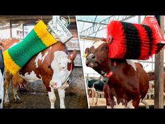 8 GADGETS E TECNOLOGIAS QUE VOCÊ NUNCA VIU ANTES - YouTube Android Box, Youtube, Cow, Gadgets, Animals, Amazing Facts, Animales, Animaux, Animal