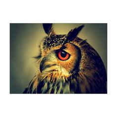 Tumblr ❤ liked on Polyvore featuring animals, owls, backgrounds and harry potter