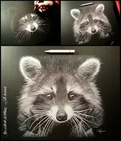 I raccoon  white pencil on black paper, by Lorine Angelmann Drawing's ART DREAMERS