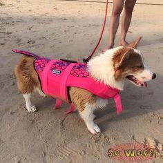 Corgi Pose Mens /Classic Beach Shorts Surf Board Breathable Swim Trunks