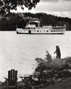 Muskoka Bear waiving at the passing boat on Lake Rosseau #MuskokaLakes #ThrowbackThursday #TBT